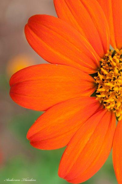 Flores3.jpg