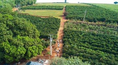 PlantaYes de cafY 2.jpg