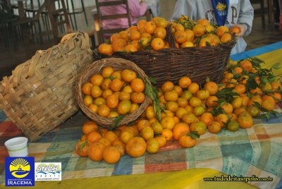 Frutas da estaYYo.jpg